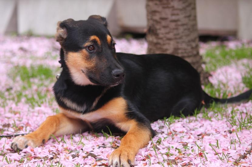 Cachorro entre flores