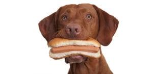 Alimentación del perro