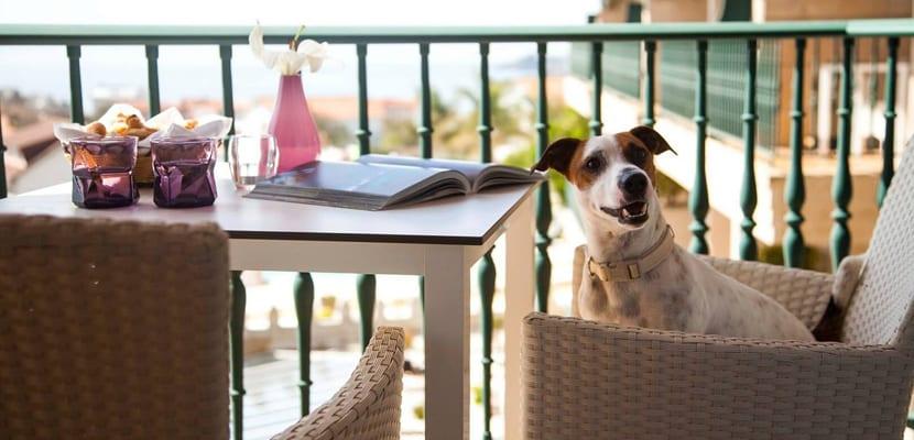 Hoteles para ir con perros