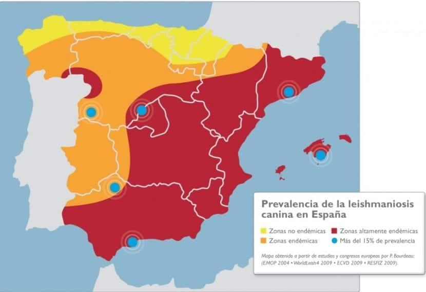 Mapa leishmaniosis en España