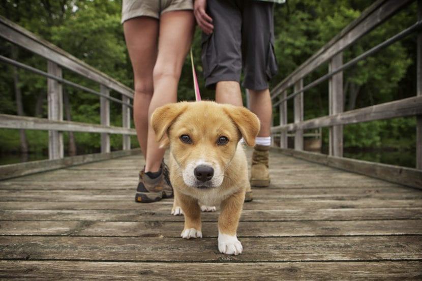 Personas paseando a un perro