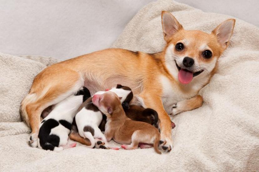 Perra con sus crías
