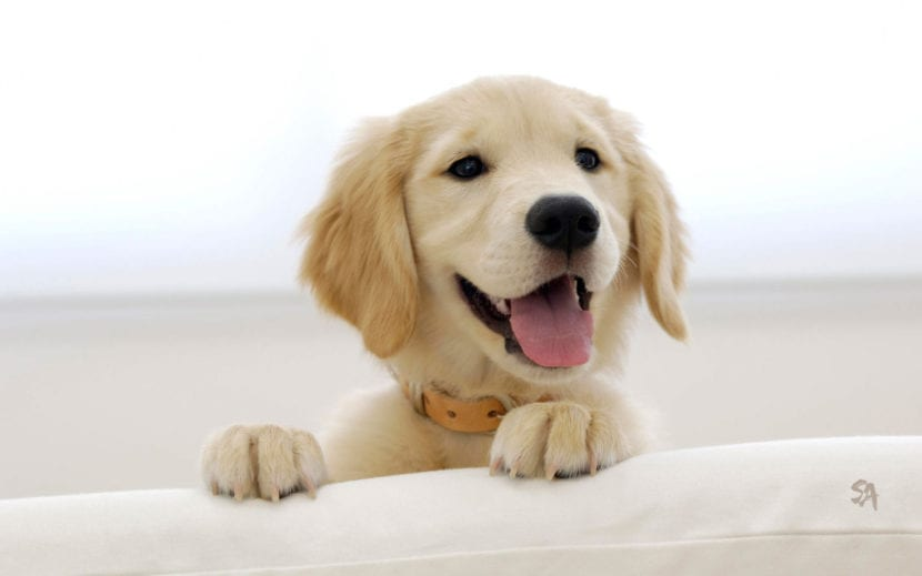 Evita que tu perro coja frío durante el baño
