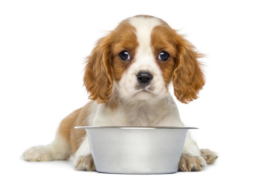 Perro comiendo