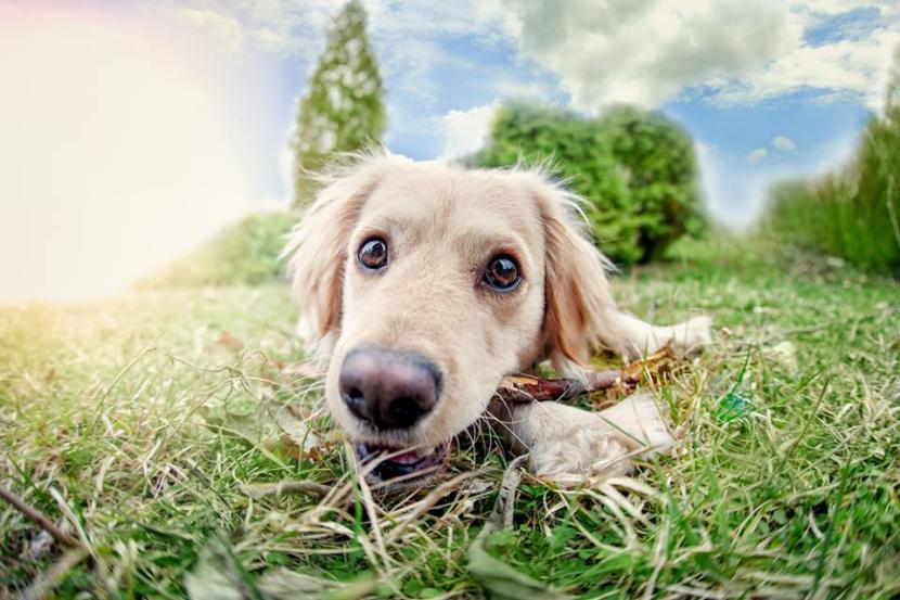 Perro en el campo