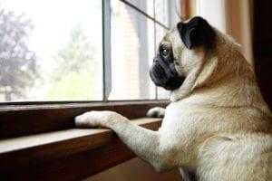 Perro esperando a su humano