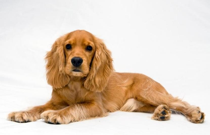 Tratar caspa en perros