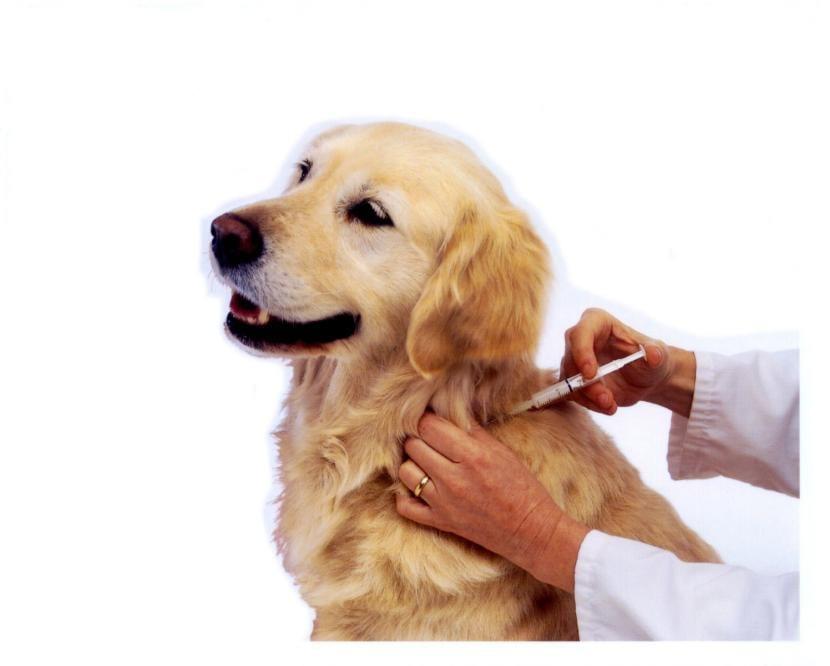 Vacunar al perro