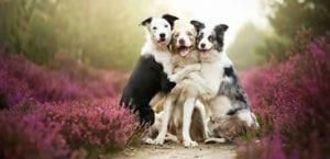 Tres perros abrazándose.
