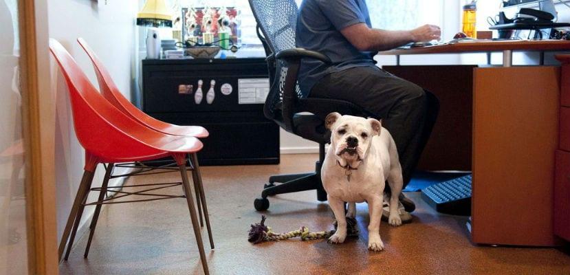 Perro en una oficina.