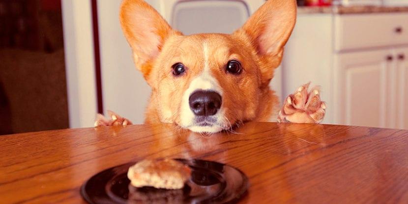 Que-come-mi-perro