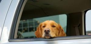 Perro dentro de un coche.
