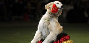 Perro practicando Dog dancing o freestyle.