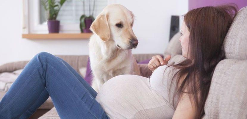 Perro junto a mujer embarazada.