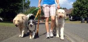 Hombre paseando a varios perros.