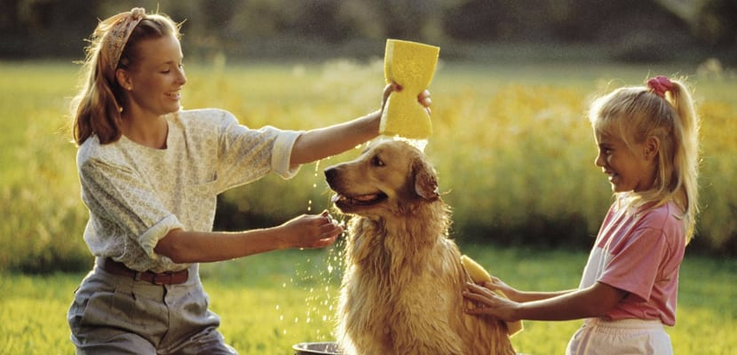 bañar-perro-verano