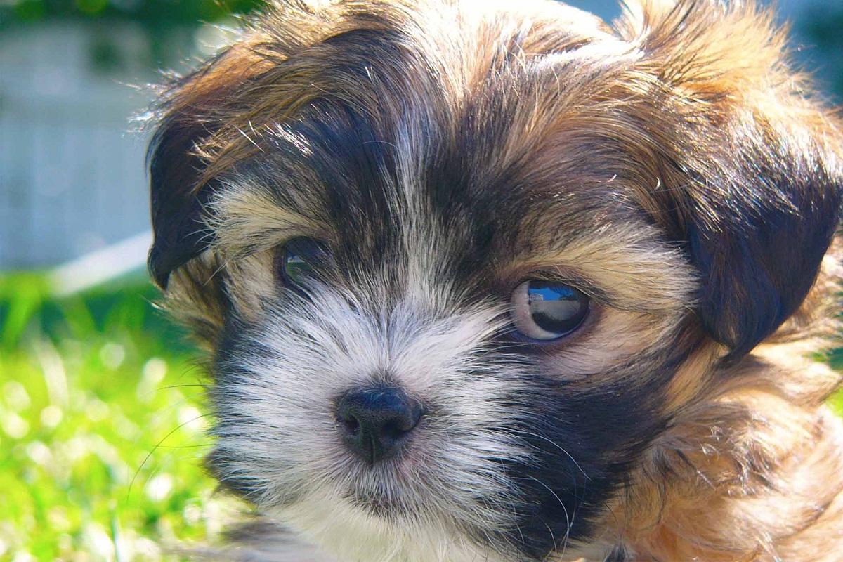 Si tu perro tiene las pupilas dilatadas puede que necesite ayuda