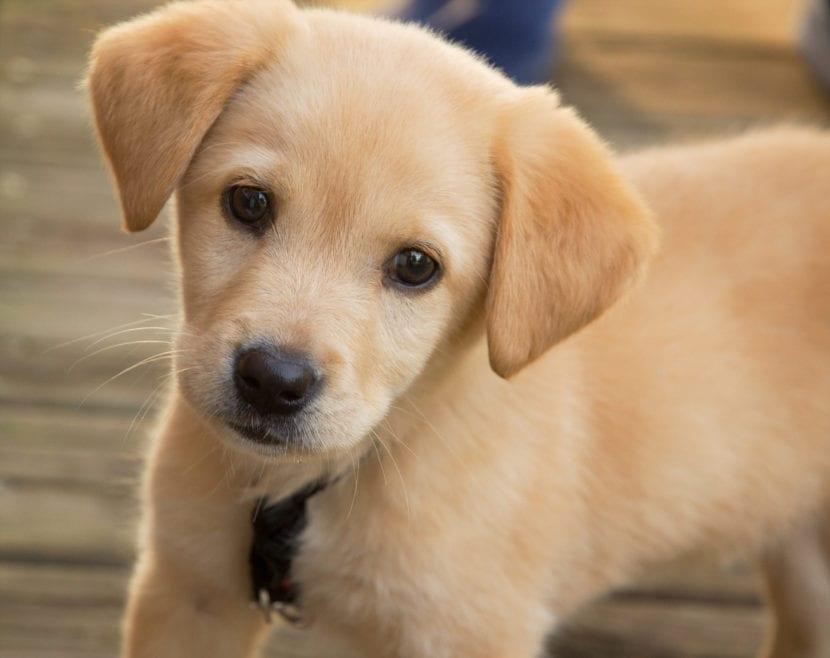 Cachorro joven de perro