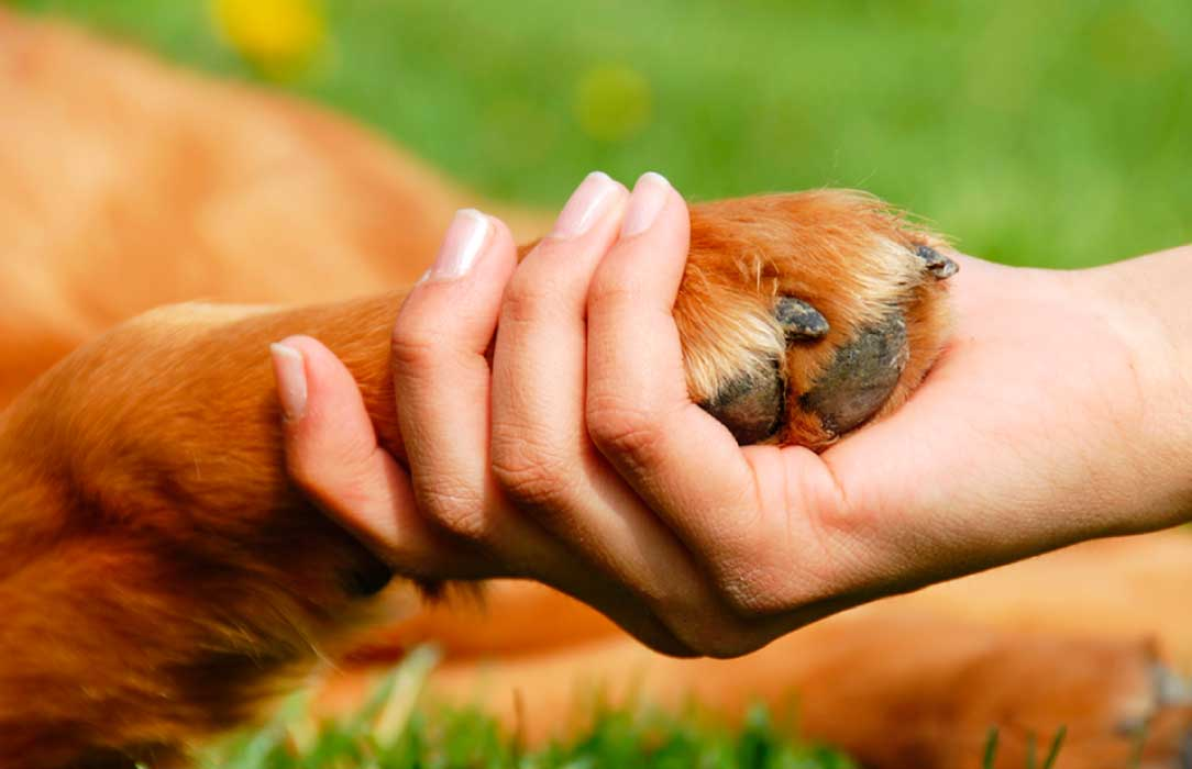 Pezuña perro