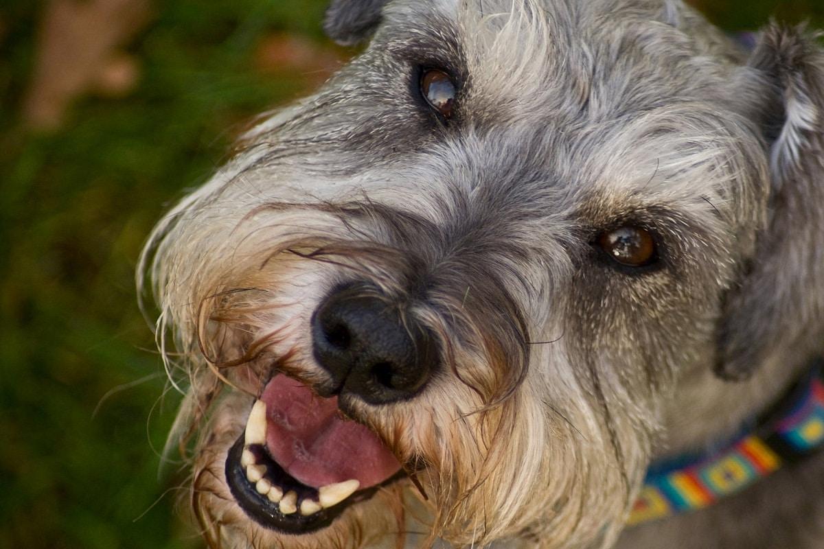 Los ojos de los perros son muy delicados