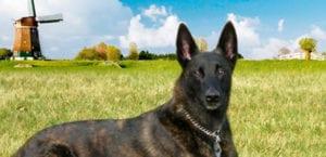 Perros abandonados en Holanda
