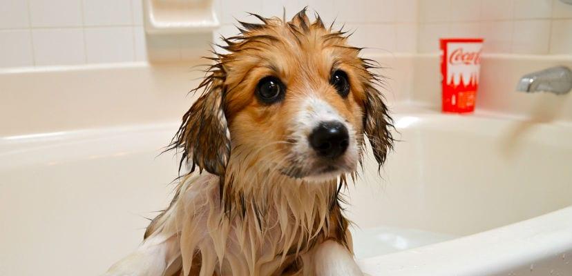 Perro en una bañera.
