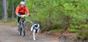 Hombre y perro practicando Bikejoring.