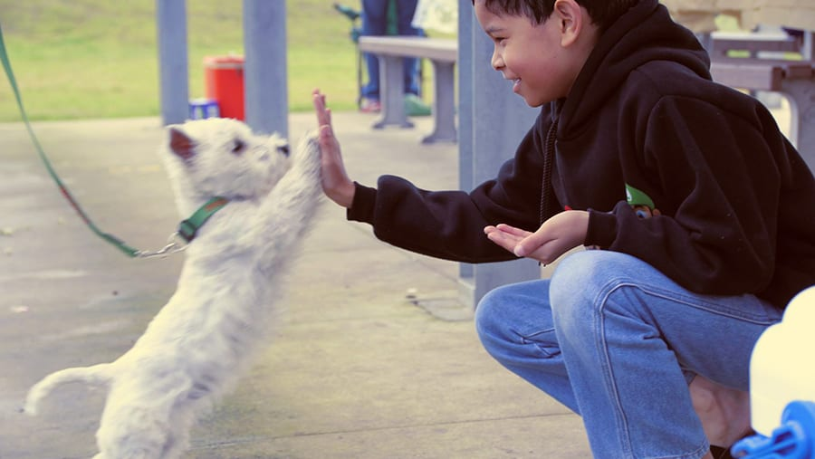 Como hacerle la vida m s f cil a mi perro - Como atraer la suerte a mi vida ...