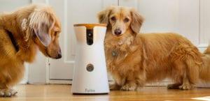 Perros jugando con la cámara interactiva Furbo.