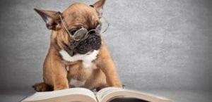 Perro leyendo un libro.