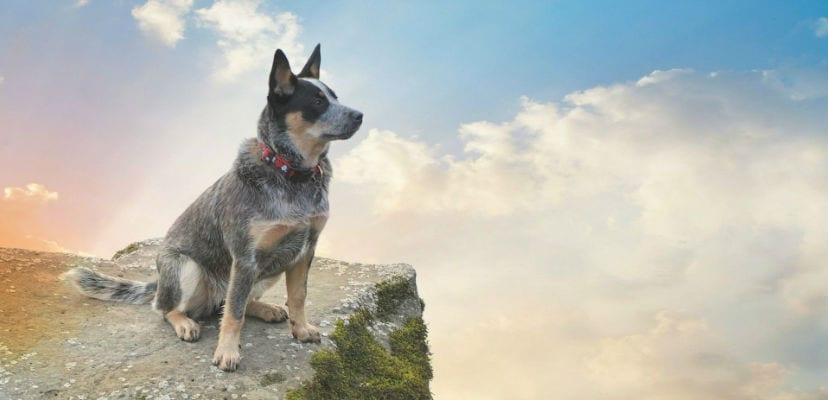 Perro en la montaña.
