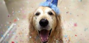 perro celebrando