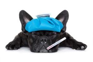 Perro con gripe