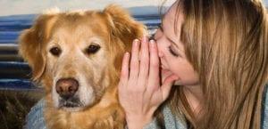 Perros entienden lo que dicen