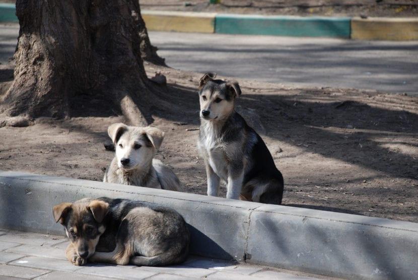 Perros en las calles