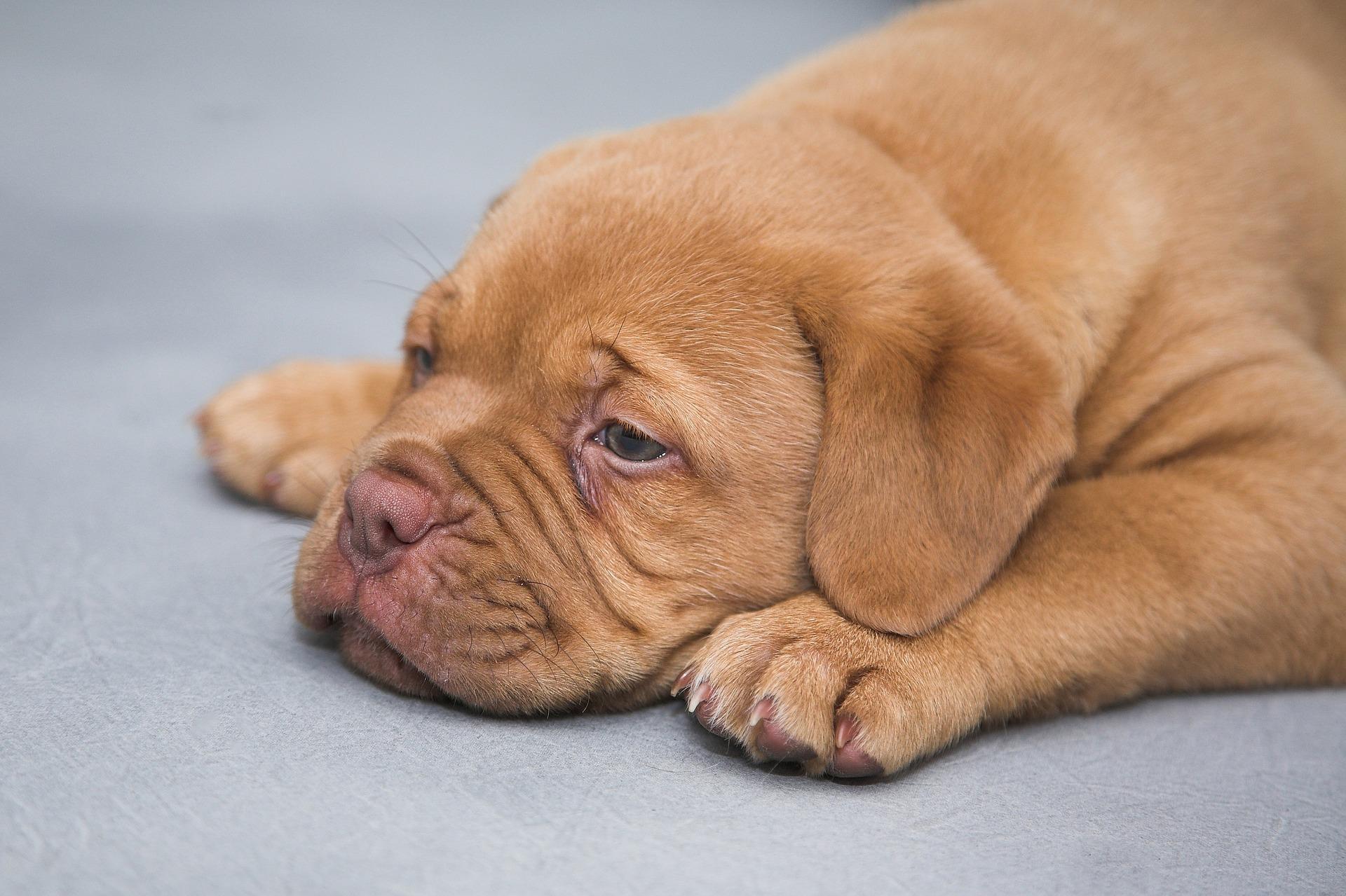 Qu hacer si a mi perro le da un ataque epil ptico for Como saber si me afecta clausula suelo