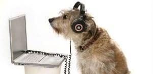 Perro con unos cascos de música.