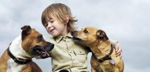 Beneficios de las mascotas