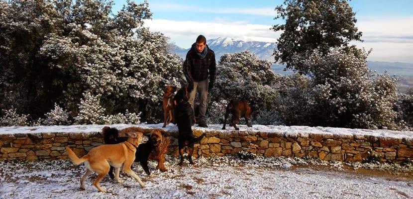Cuidador canino