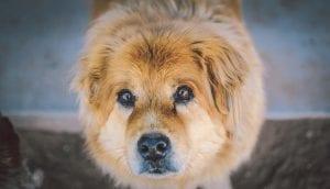Perro marrón