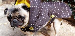 Ropa de perro en otoño