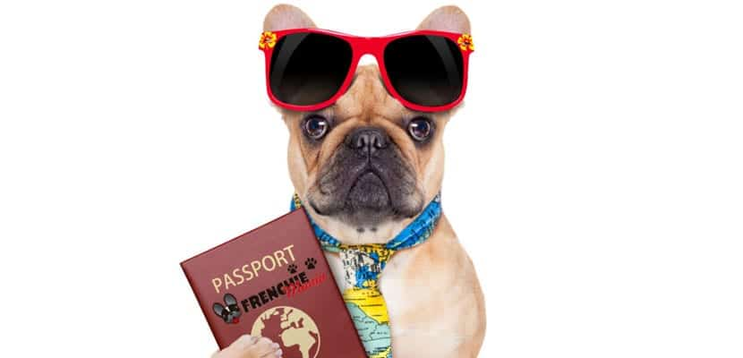 Perro de viaje