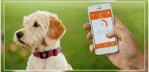 DogLogBook, app para el cuidado de los perros.