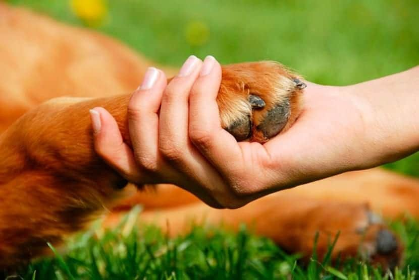 Artritis canina