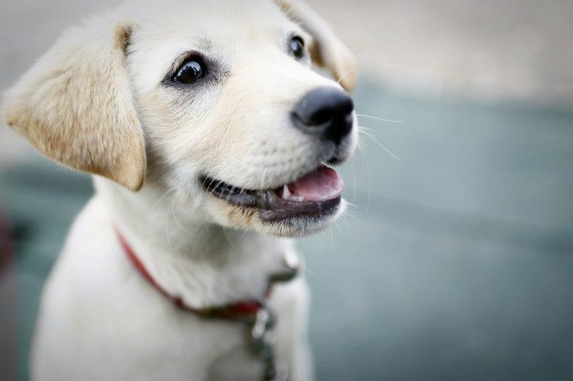 Cachorro de perro