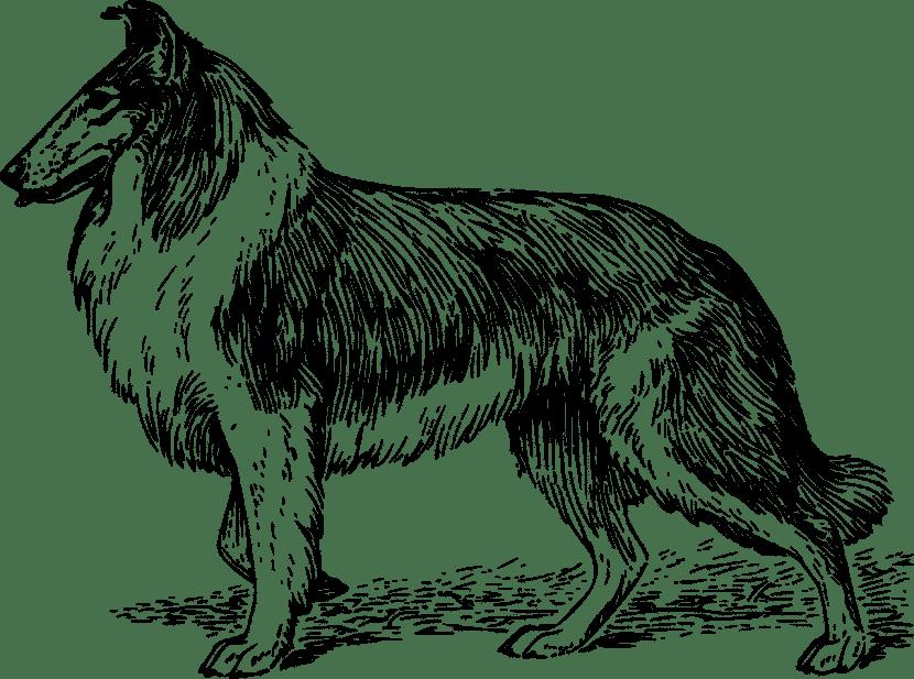 Dibujos De Perros Muy Bonitos Y Faciles Para Colorear Pintar O Calcar