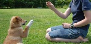 Educar al perro