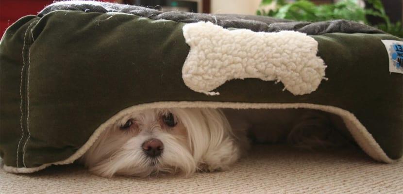 miedo-perro-ruidos-fuertes