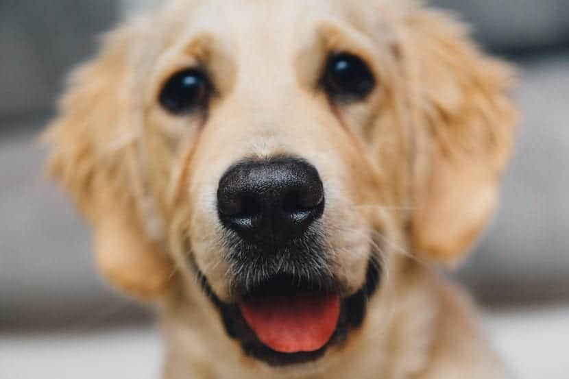 Perro alegre