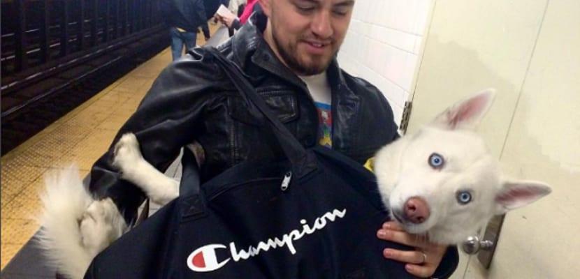 Perros en bolsa